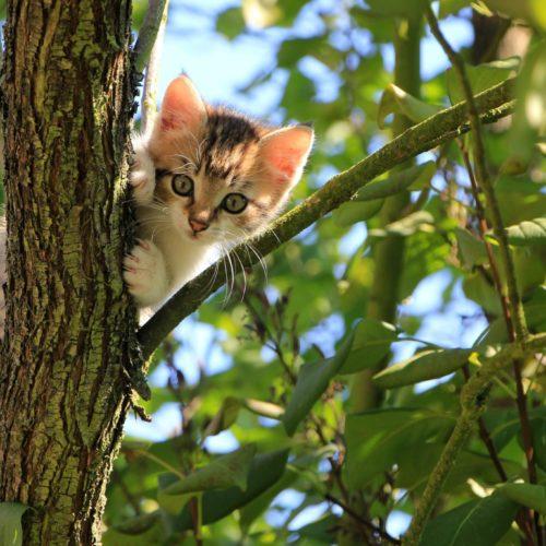 Wie die Katze die Welt eroberte