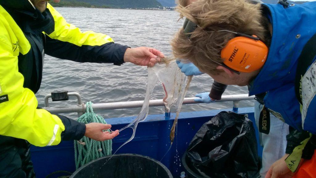 Fischer halten ein Stück Glibber in die Höhe, in den ein kleiner Schleimaal eingehüllt ist.
