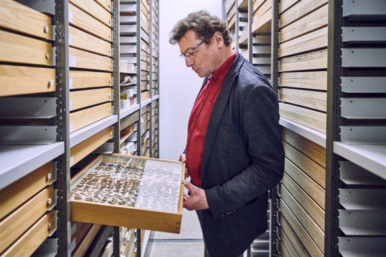 Christian Kropf, der Leiter der Abteilung Wirbellose am Naturhistorischen Museum Bern, betrachtet im Kellerarchiv einen Glaskasten mit einer Sammlung verschiedener Heuschrecken.