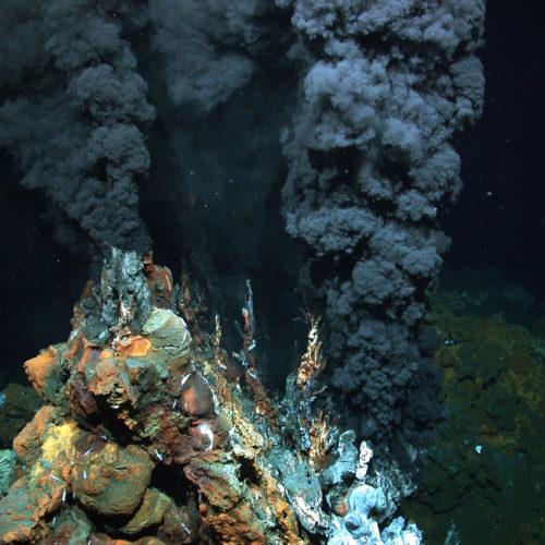 Goldrausch in der Tiefsee bedroht unerforschte Lebensräume