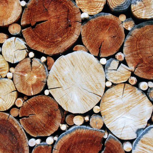 Das Holz der Zukunft ist hart wie Stahl