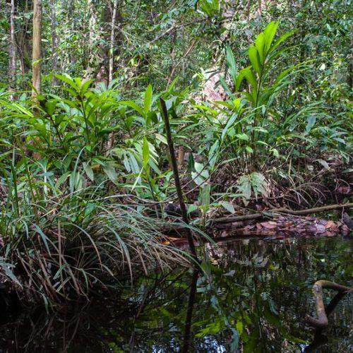 Urwald und ein kleiner Teich oder See davor