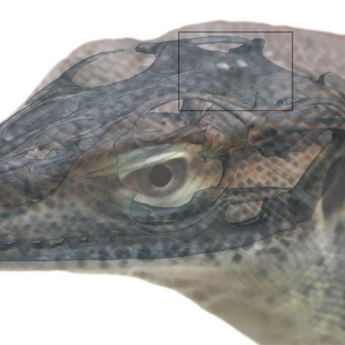 Vieräugiges Ur-Reptil entdeckt