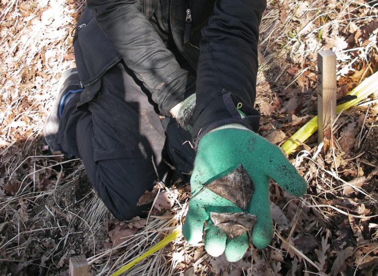 Eine Forscherin oder ein Forscher kniet im Wald und streckt zwei Teebeutel in Richtung Kamera.