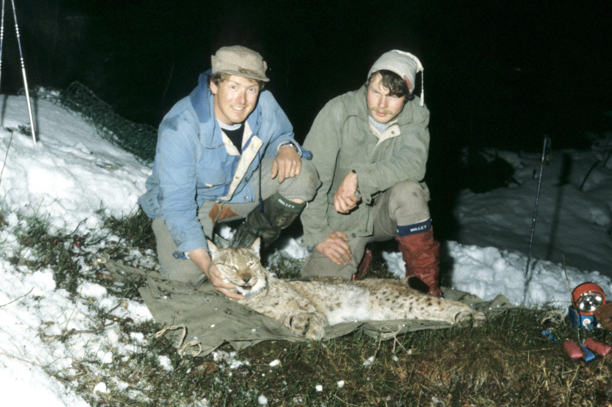 Urs Breitenmoser (rechts) und sein Kollege Heinrich Haller im Jahr 1984 mit einem betäubten Luchs.