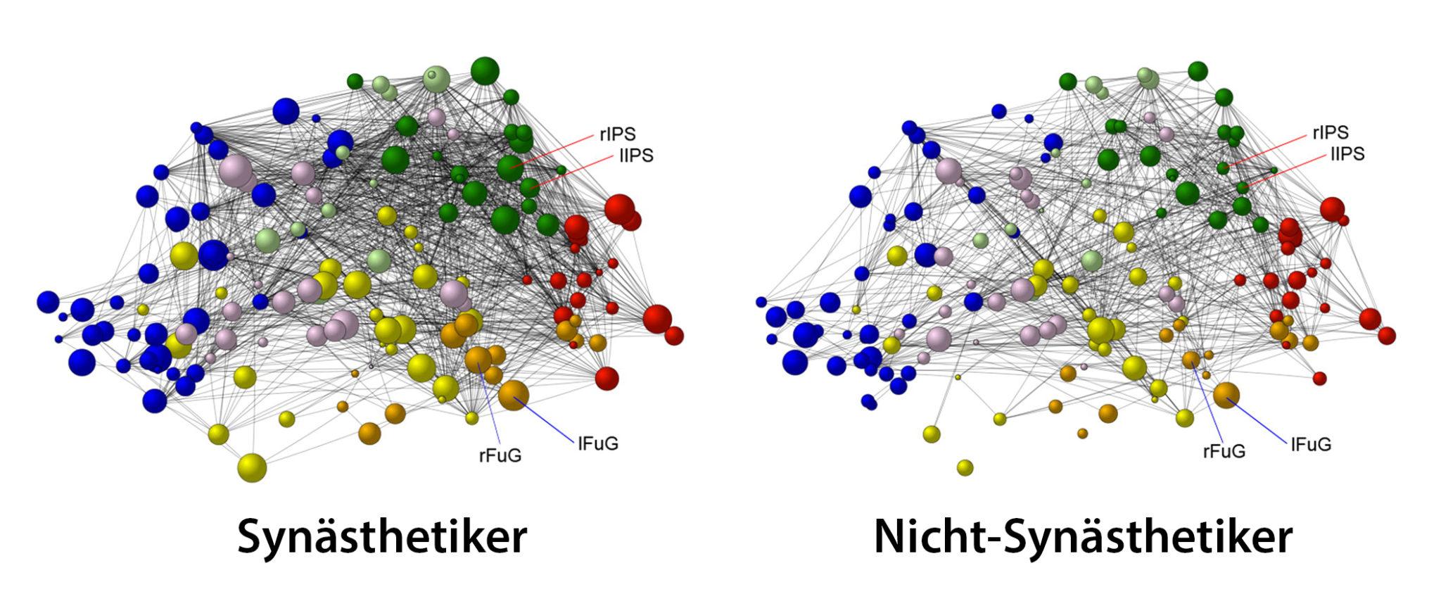 Schematische Darstellung von Verknüpfungen im Gehirn: Jenes von Synästhetikern ist komplexer als bei Nicht-Synästhetikern.