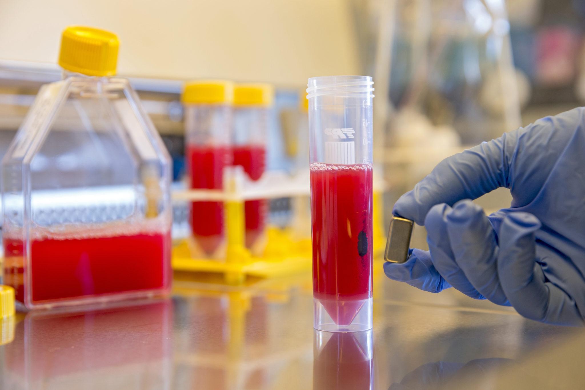 Nanomagnete im Labortest – die Teilchen fischen Giftstoffe aus einer verdünnten Blutprobe.