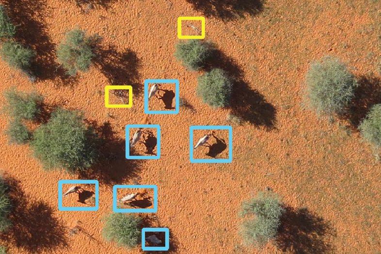 Die künstliche Intelligenz in Aktion. Auf Drohnenfotos markiert sie Tiere blau und Büsche gelb.