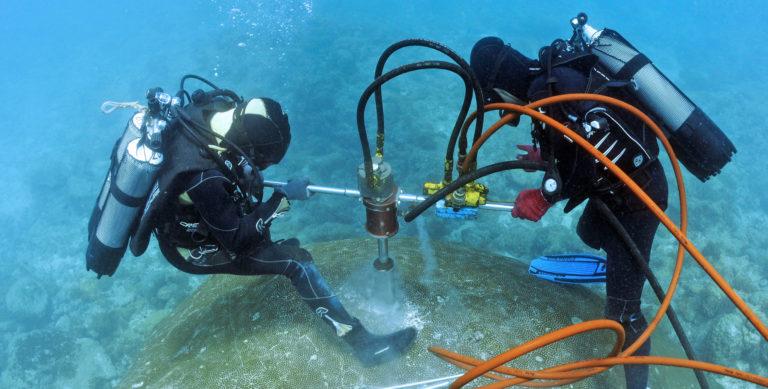 Zwei Taucher bohren in der Tiefe ein Loch eine Koralle.