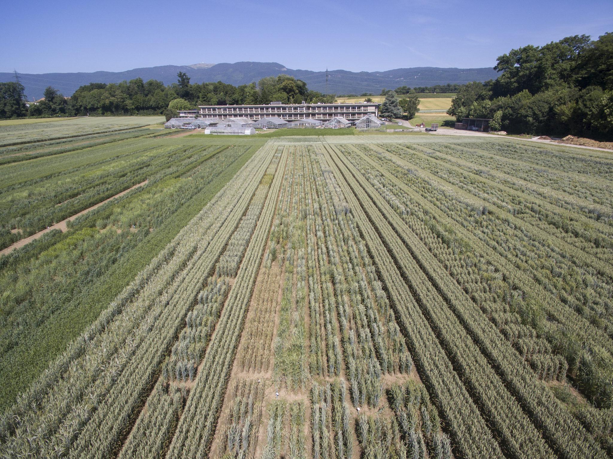 Das Getreidefeld vor dem Gebäude der nationalen Saatgutbank: Jede Pflanzensorte gedeiht auf einer für sie bestimmten Parzelle.