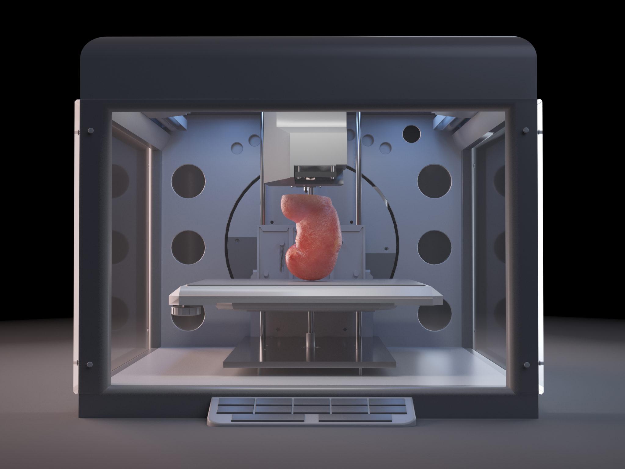 Noch existiert sie nur als Computerbild. Doch die Niere aus dem 3D-Drucker könnte eines Tages Leben retten.