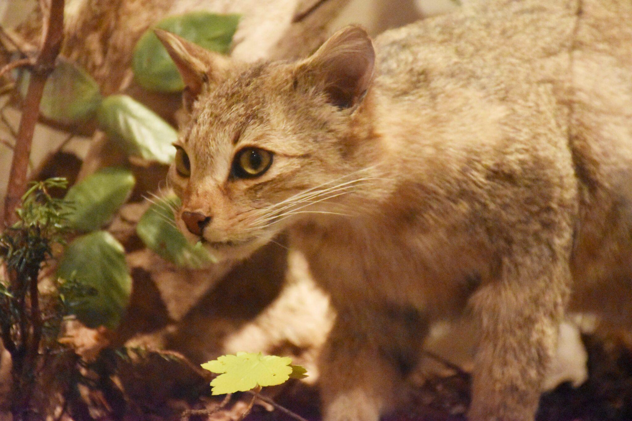 Eine Hauskatze auf Jagd
