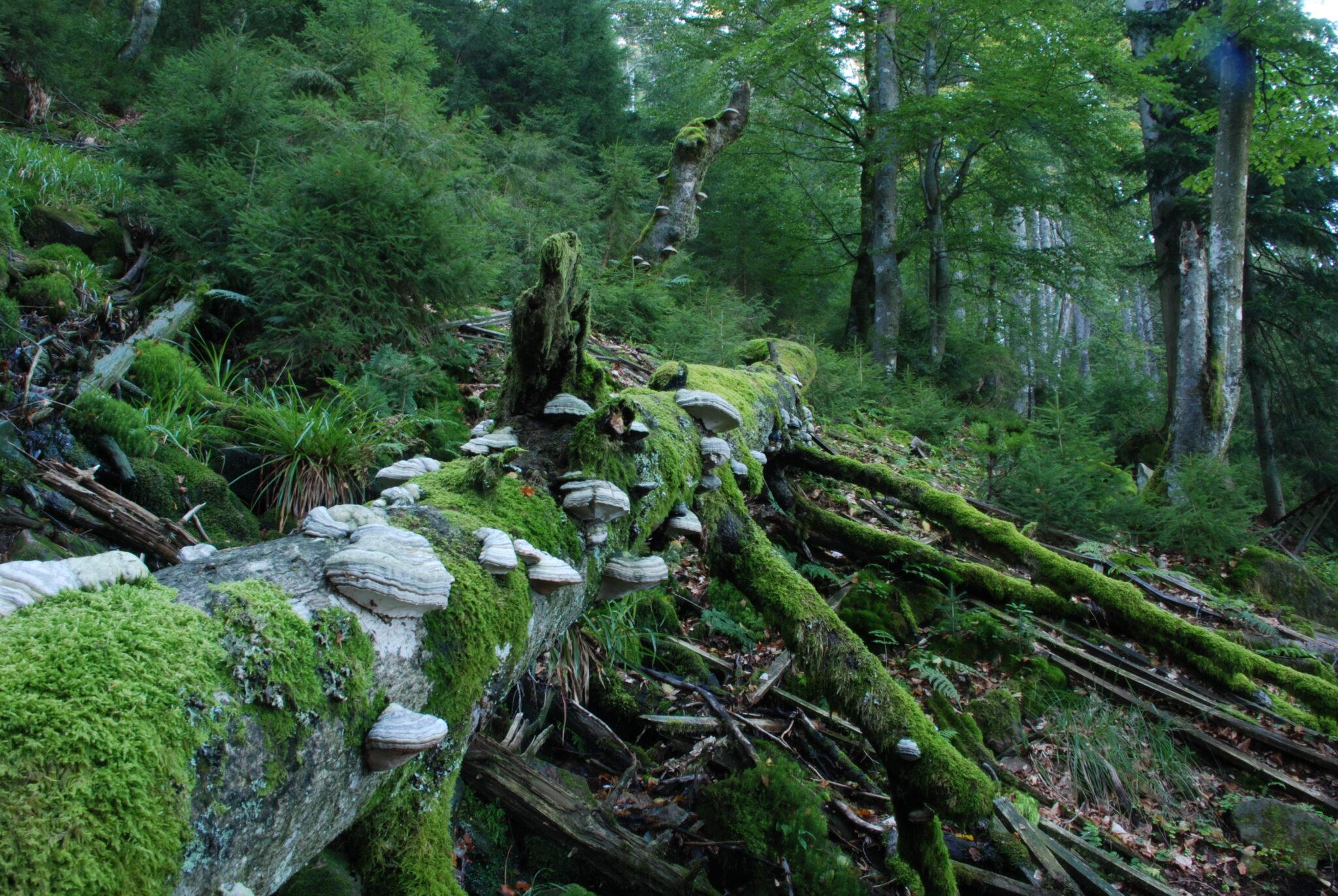 Mit Pilzen und Moos bedeckter Baum im Wald