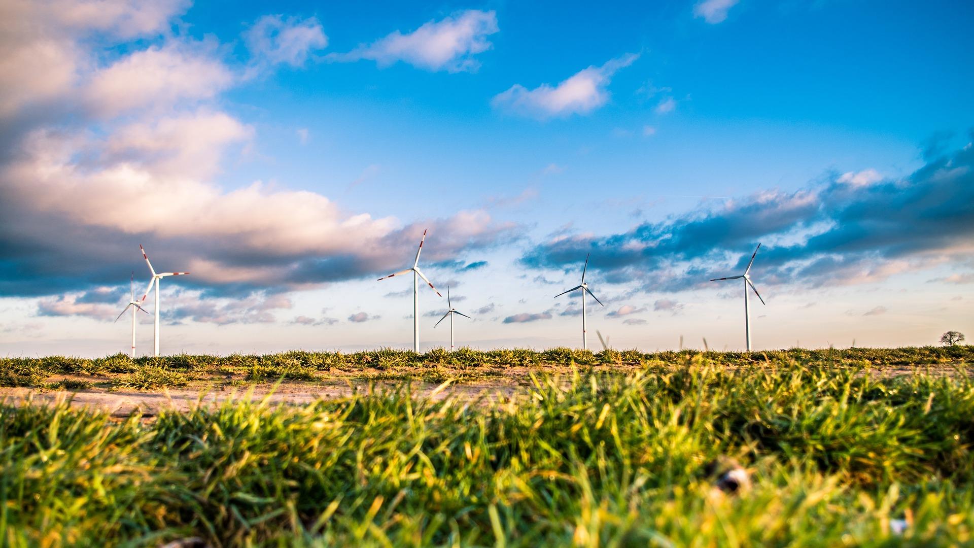 Windräder auf einer grünen Wiese