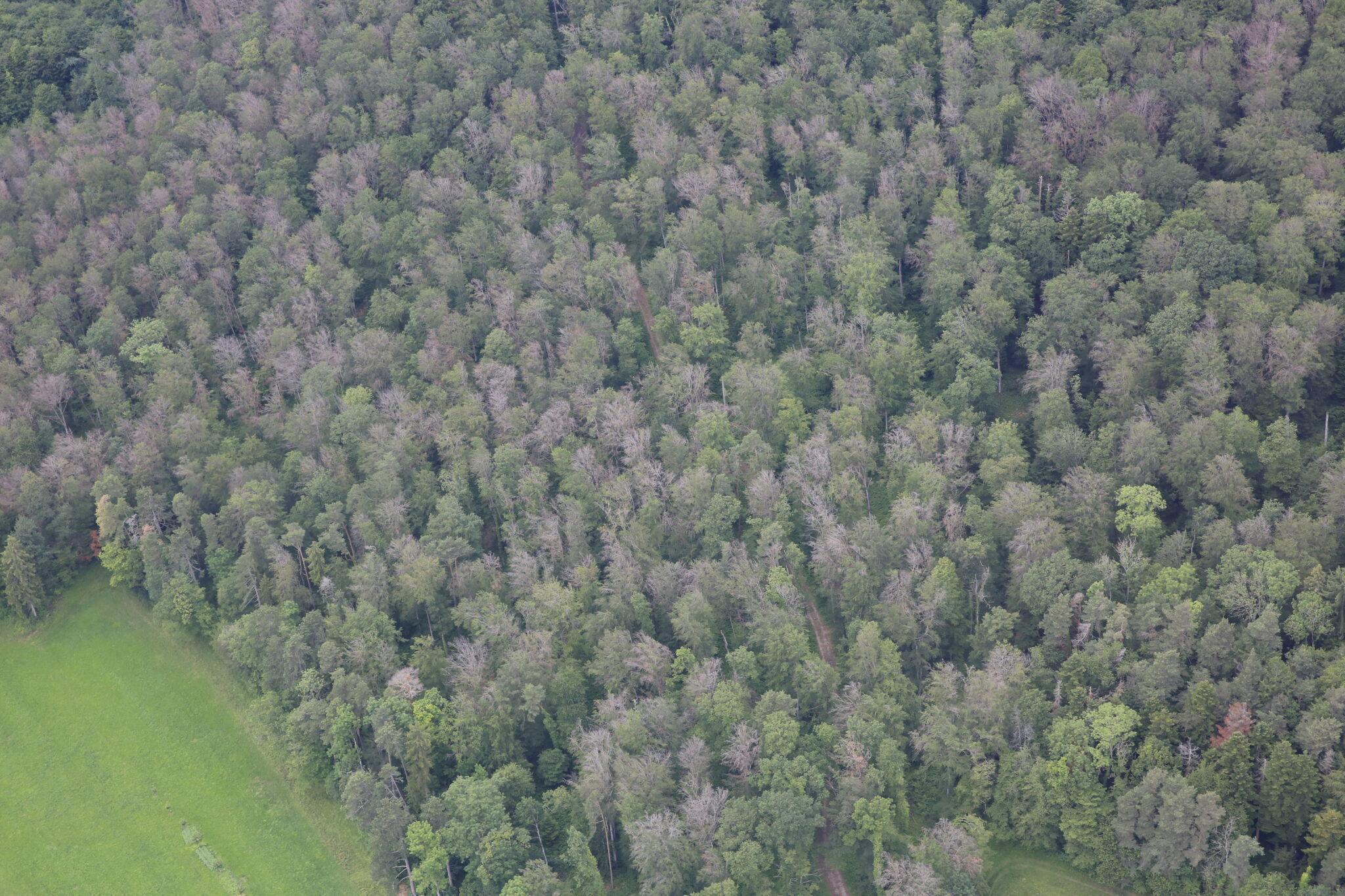 Bäume von oben.