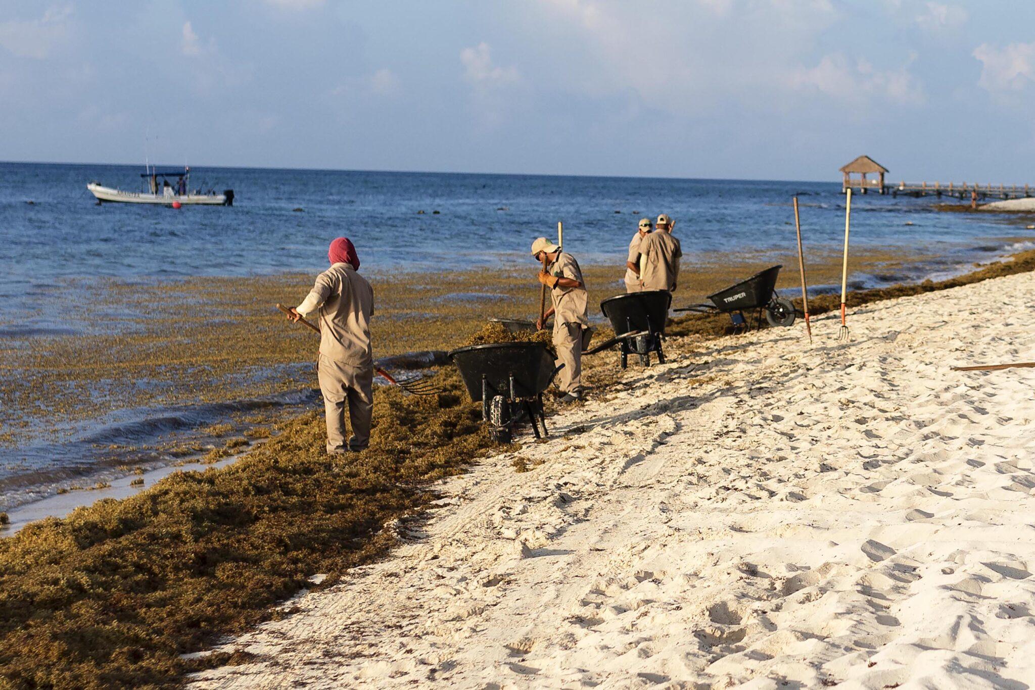 Arbeiter entfernen Algen am Strand.