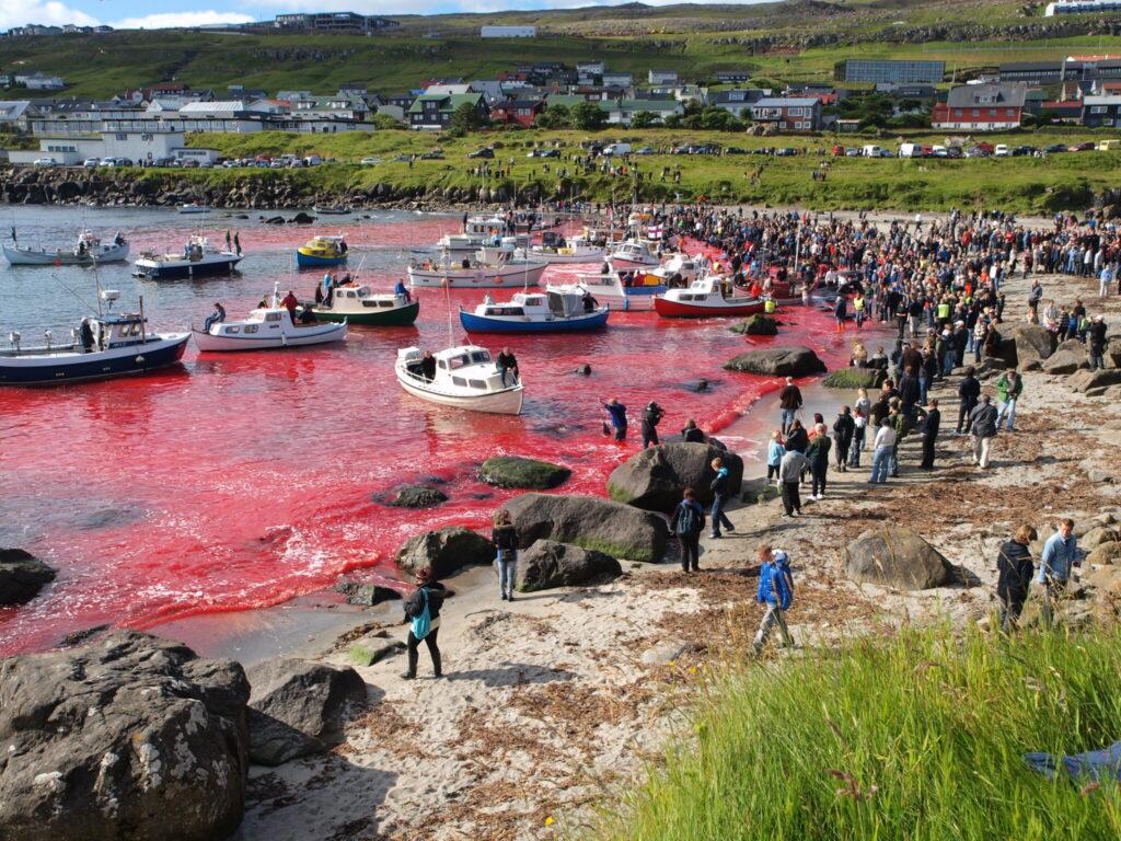 Rotgefärbtes Wasser am Strand der Färöer Inseln