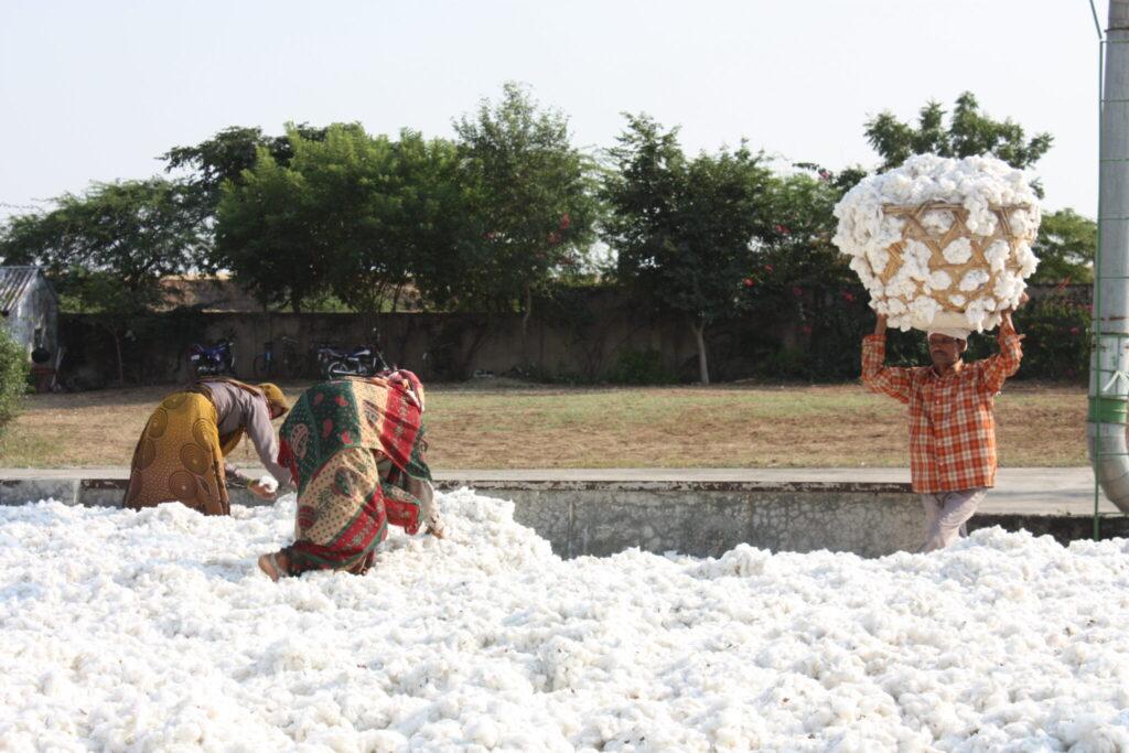 Drei Personen beim Baumwolle sammeln