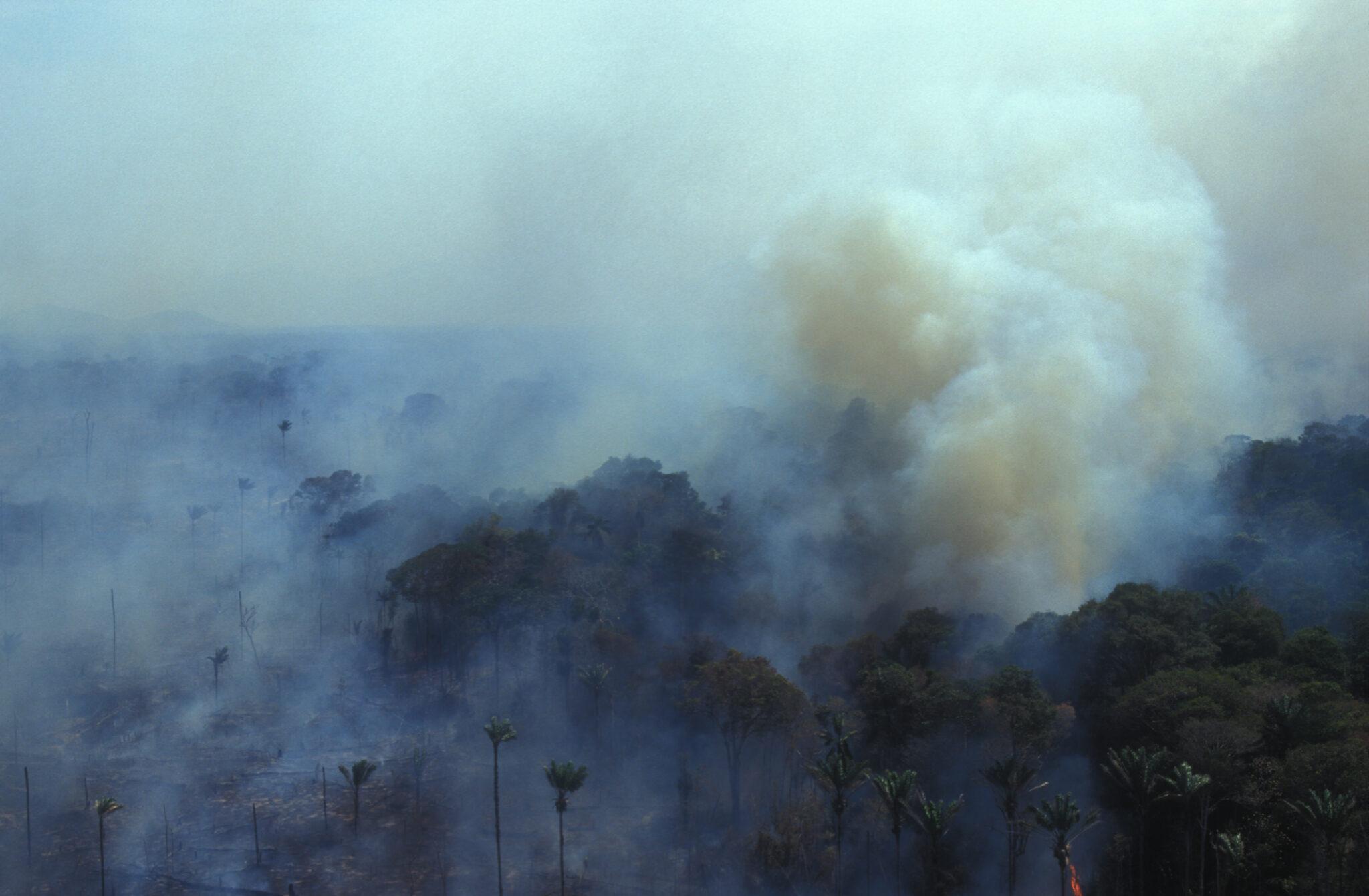 Sehr viel Rauch über dem Regenwald