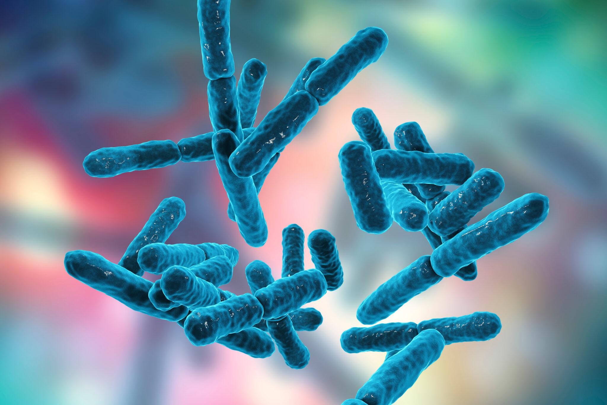 Bakterien animiert