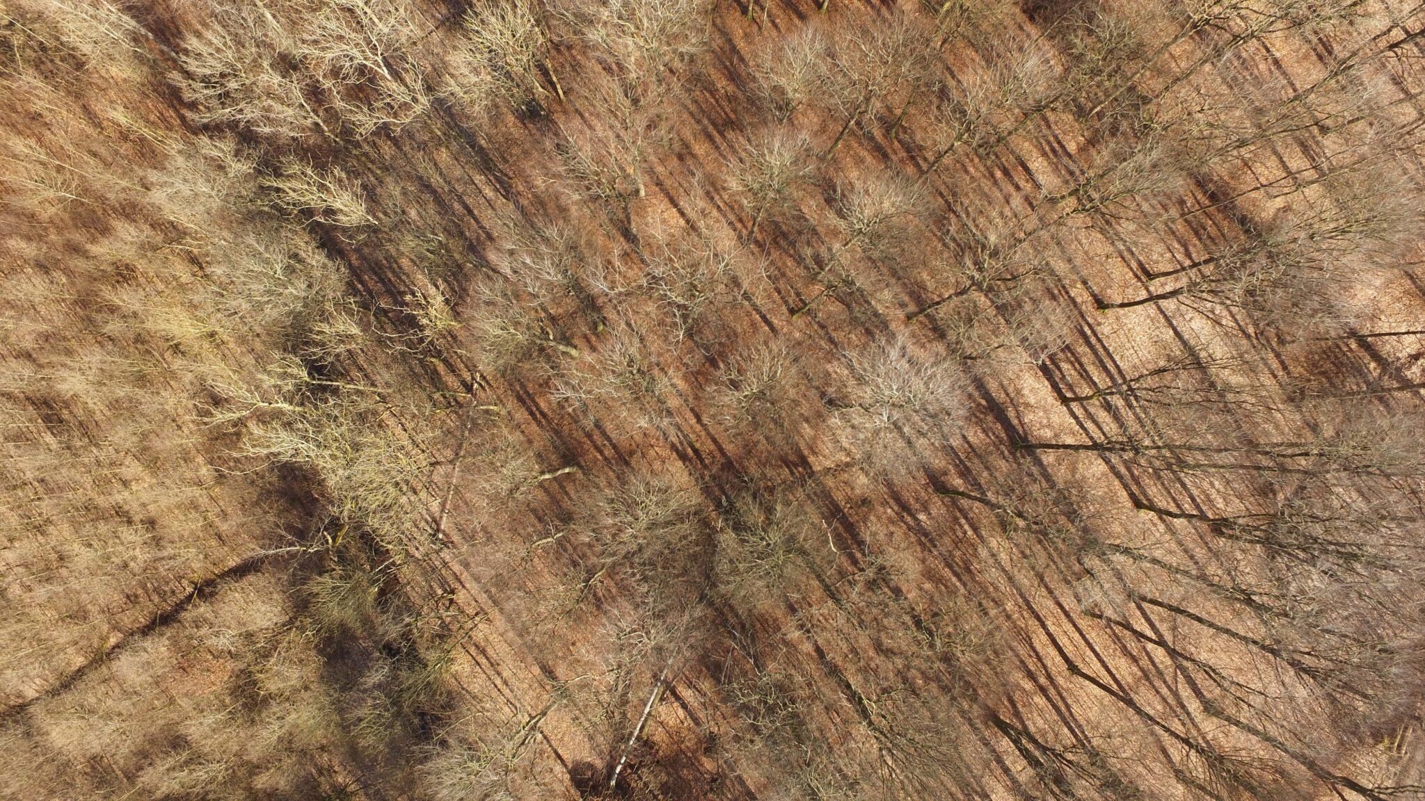 Vogelschau von vertrockneten Bäumen