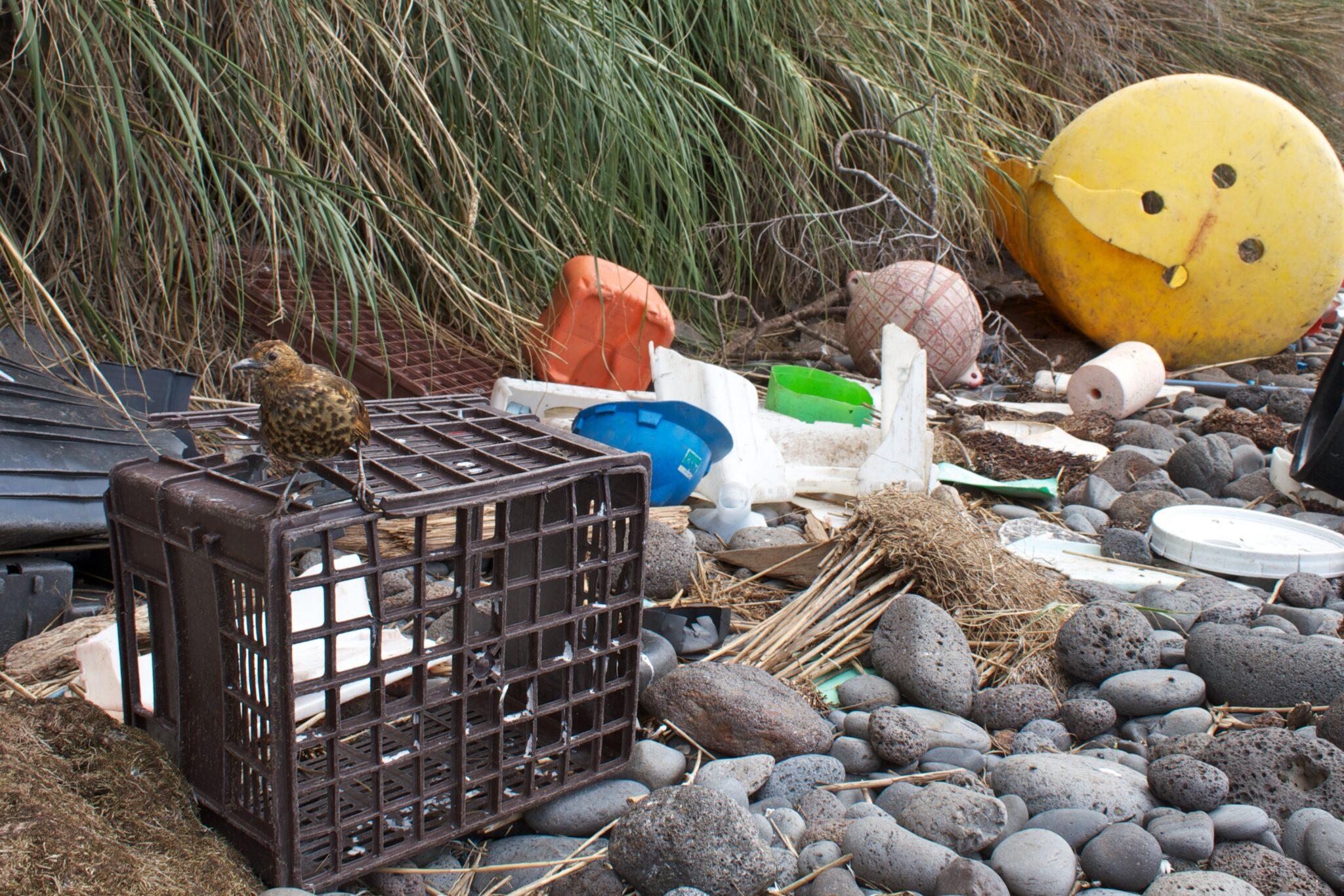 Plastikmüll auf inaccessible island.