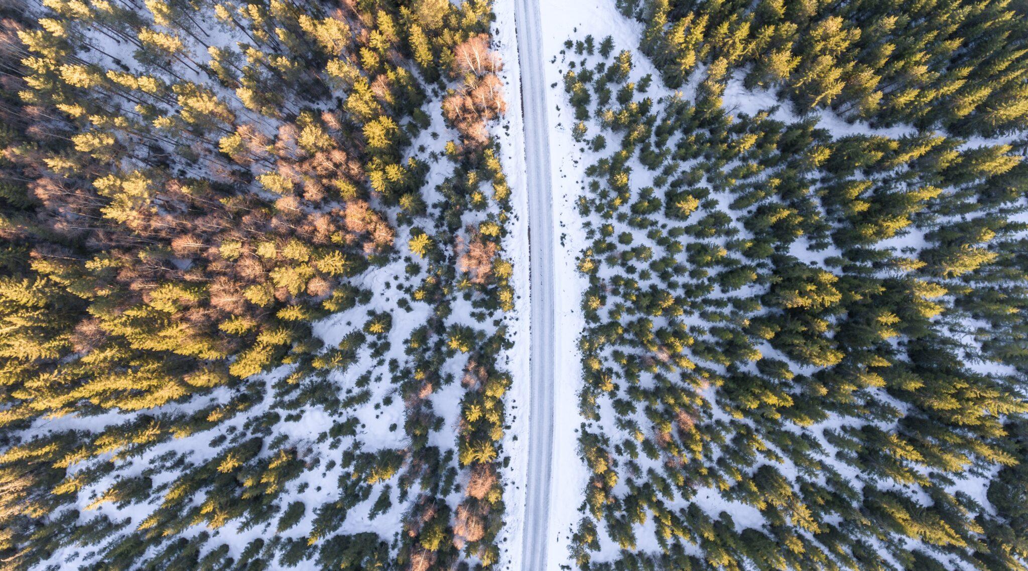 verschneiter Wald in Lillehammer.