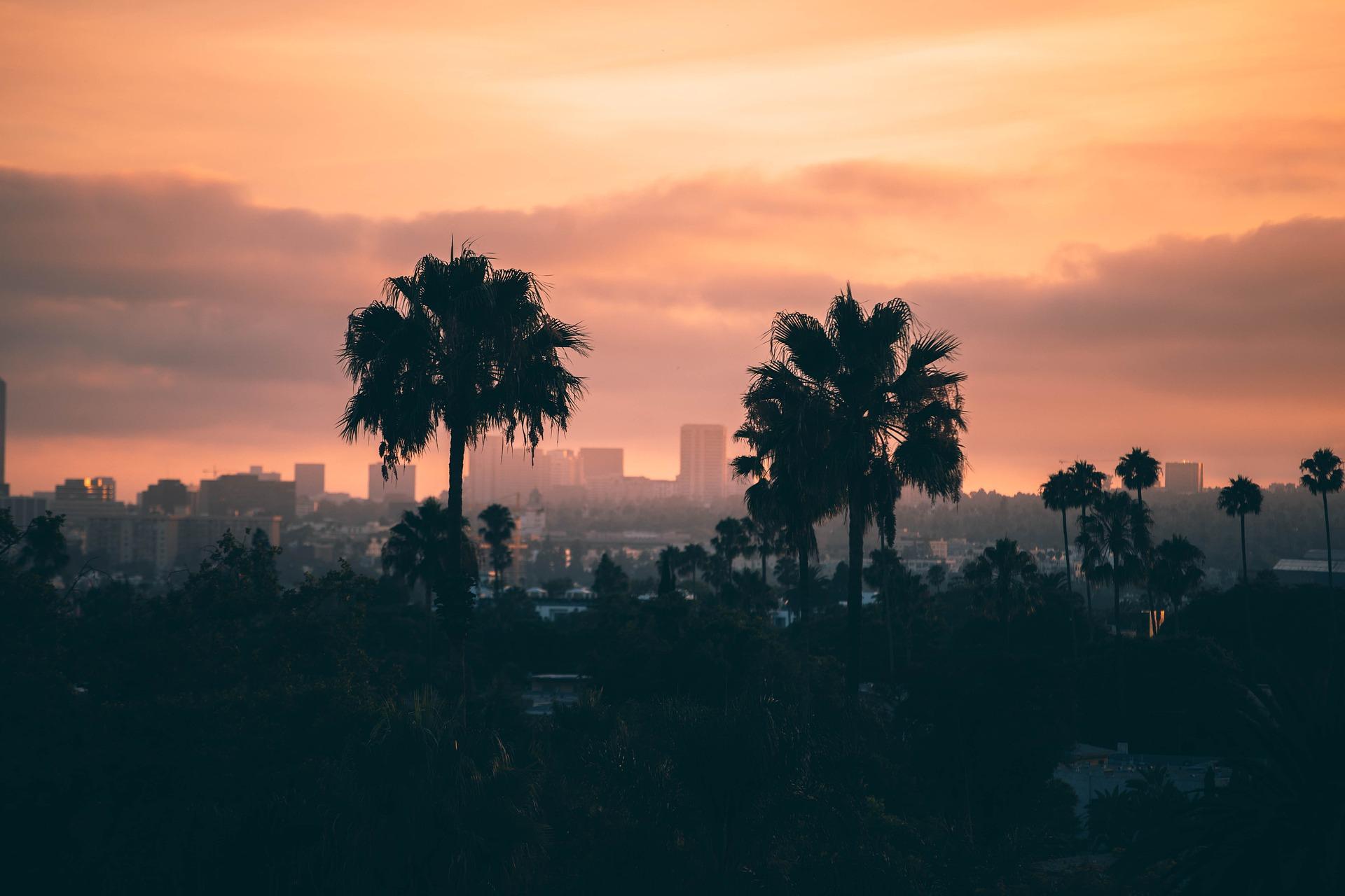 Los Angeles im Sonnenuntergang, prominent zu sehen zwei grosse Bäume.