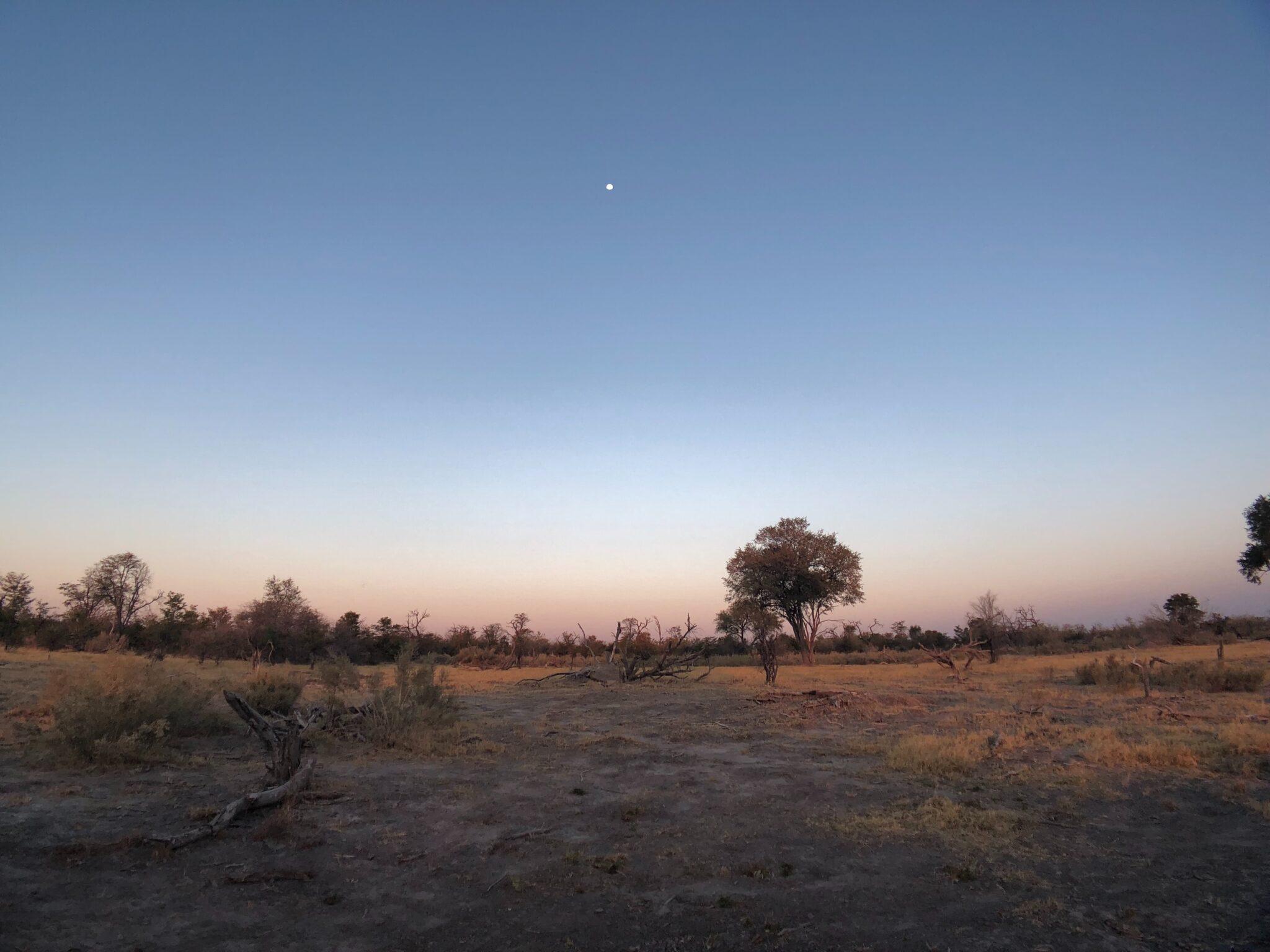 Bild der botswanischen Steppe.