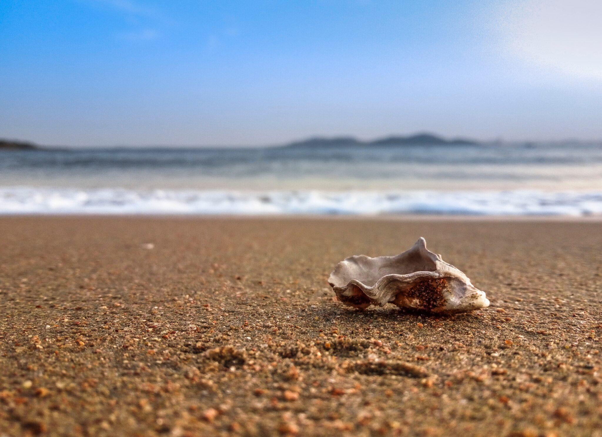 Sand am Meer mit Muschel im Vordergrund