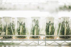 Pflanzen in Laborgläschen