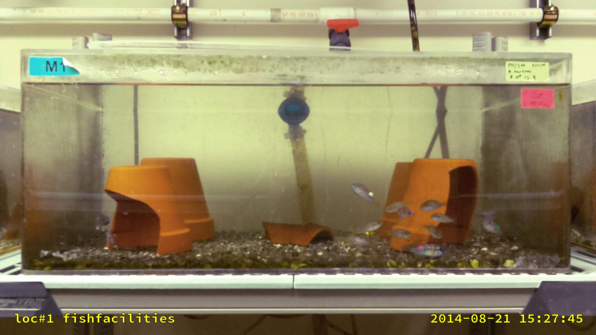 Aquarium an der Universität Austin, Texas