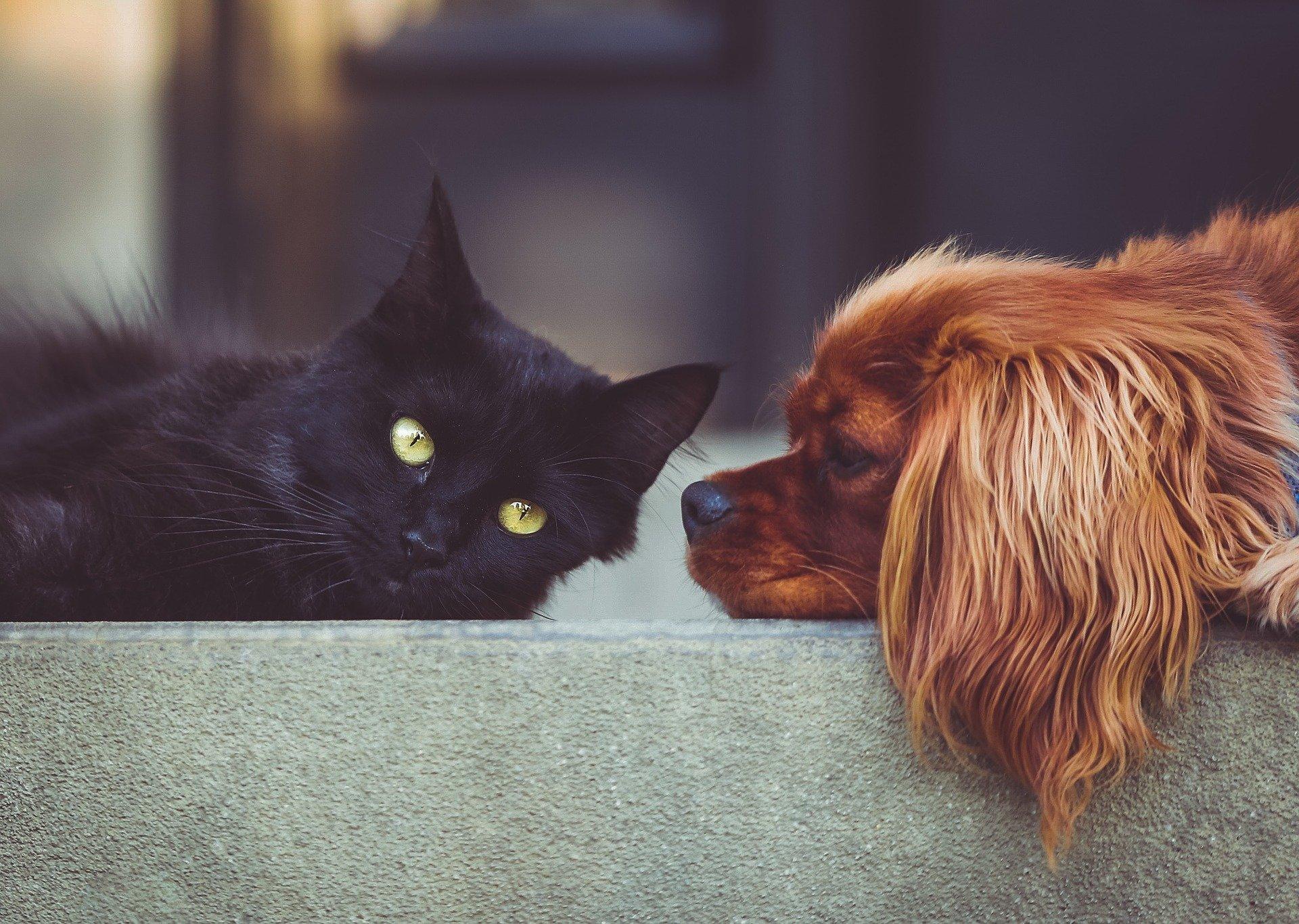 schwarze Katze und ein brauner Hund liegen nebeneinander.