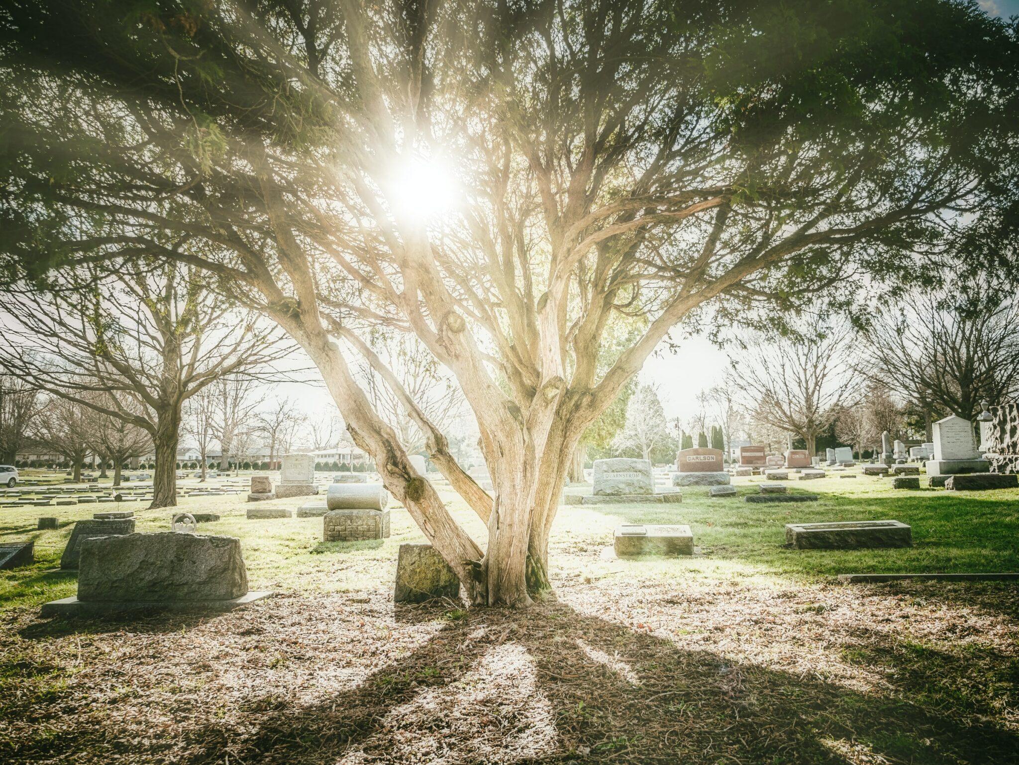 Friedhof mit Baum im Sonnenlicht