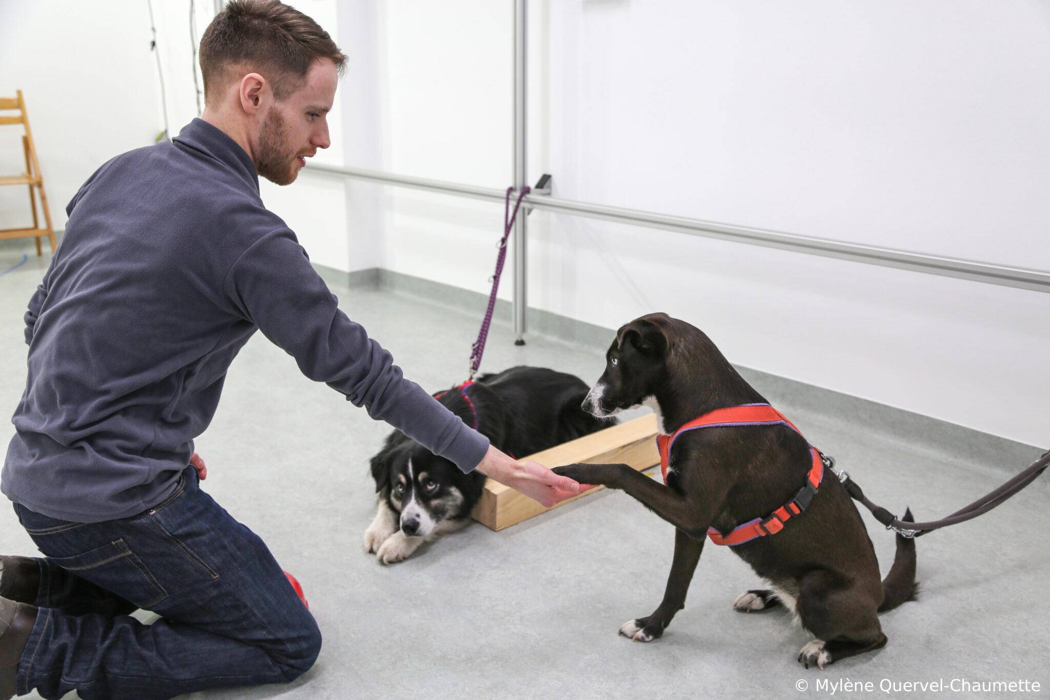 Ein Mann lässt sich von einem Hund Pfötchen geben, ein zweiter Hund liegt daneben