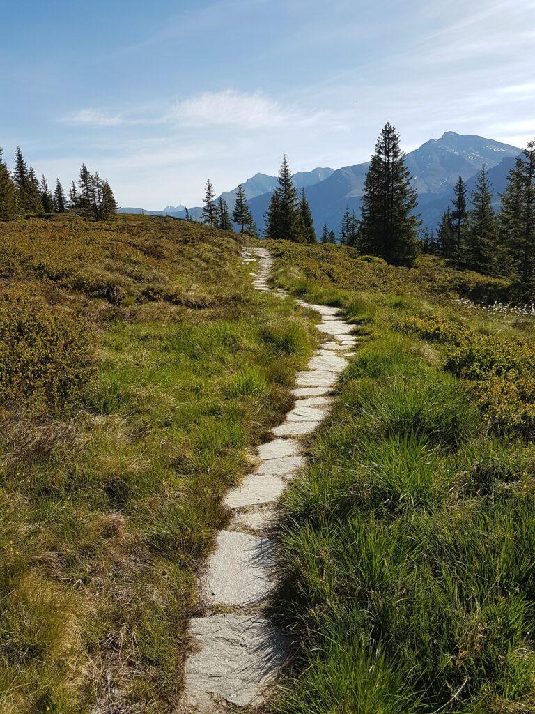 Ein kleiner Steinpfad führt durch ein Hochmoor.