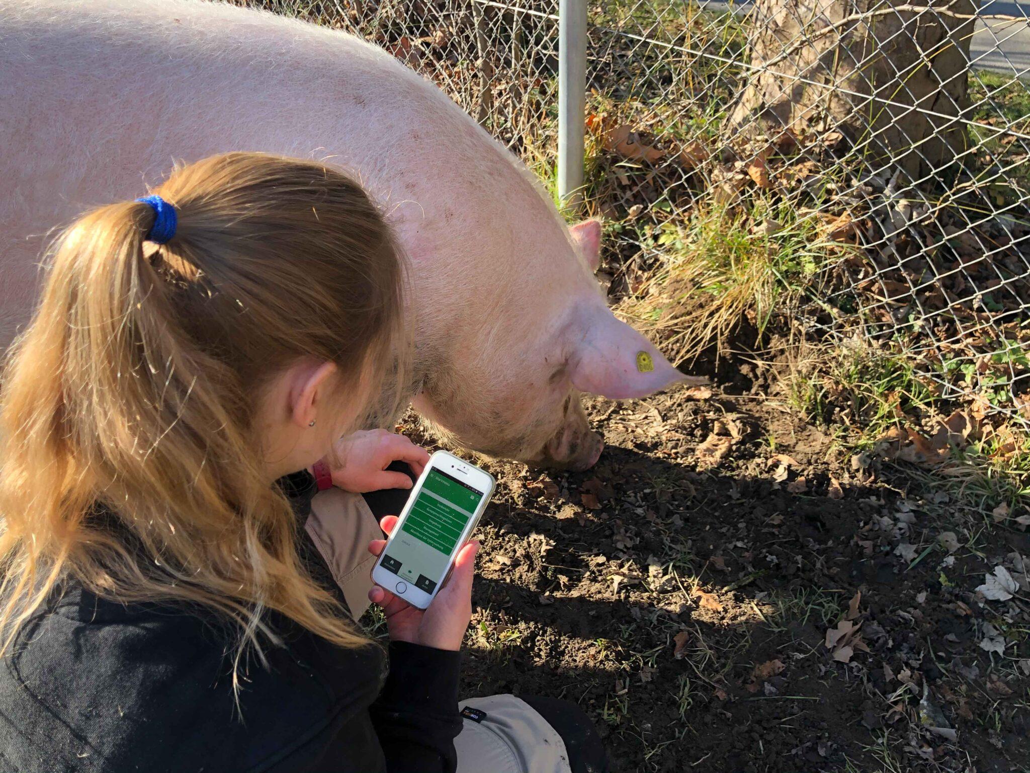 Eine Tierärztin erfasst die Gesundheit eines Schweines mit der Handy-App