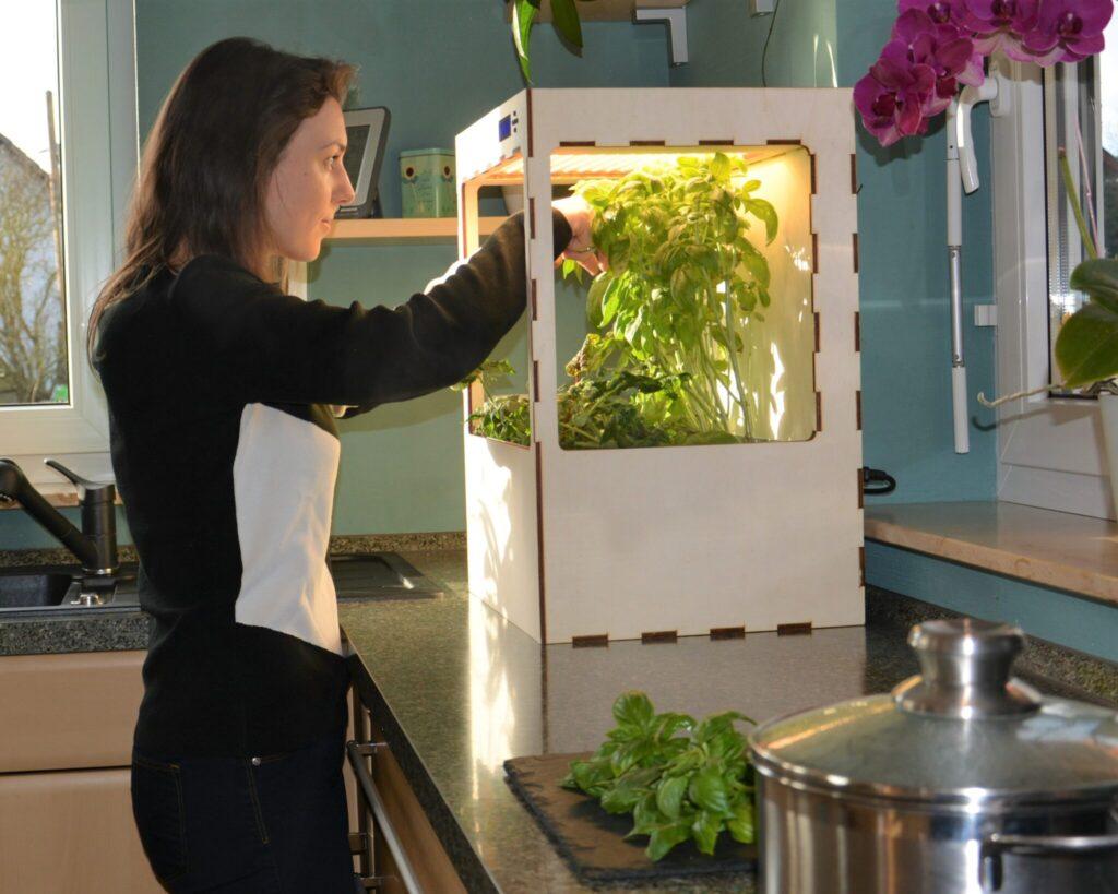 Eine junge Frau erntet etwas Basilikum aus dem Anbaukasten.