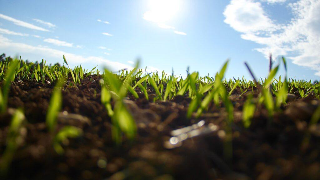 Erde, auf der grüne Pflanzen spriessen