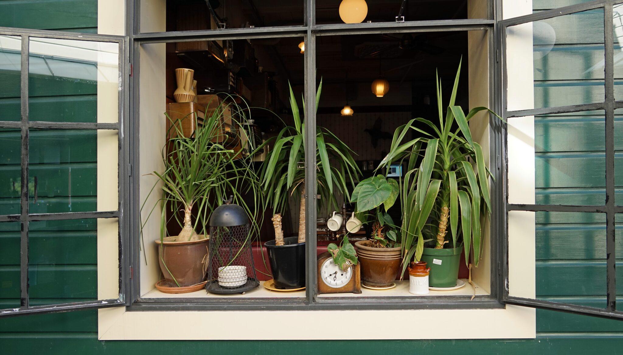 Mehrere Grünpflanzen an einem offenen Fenster