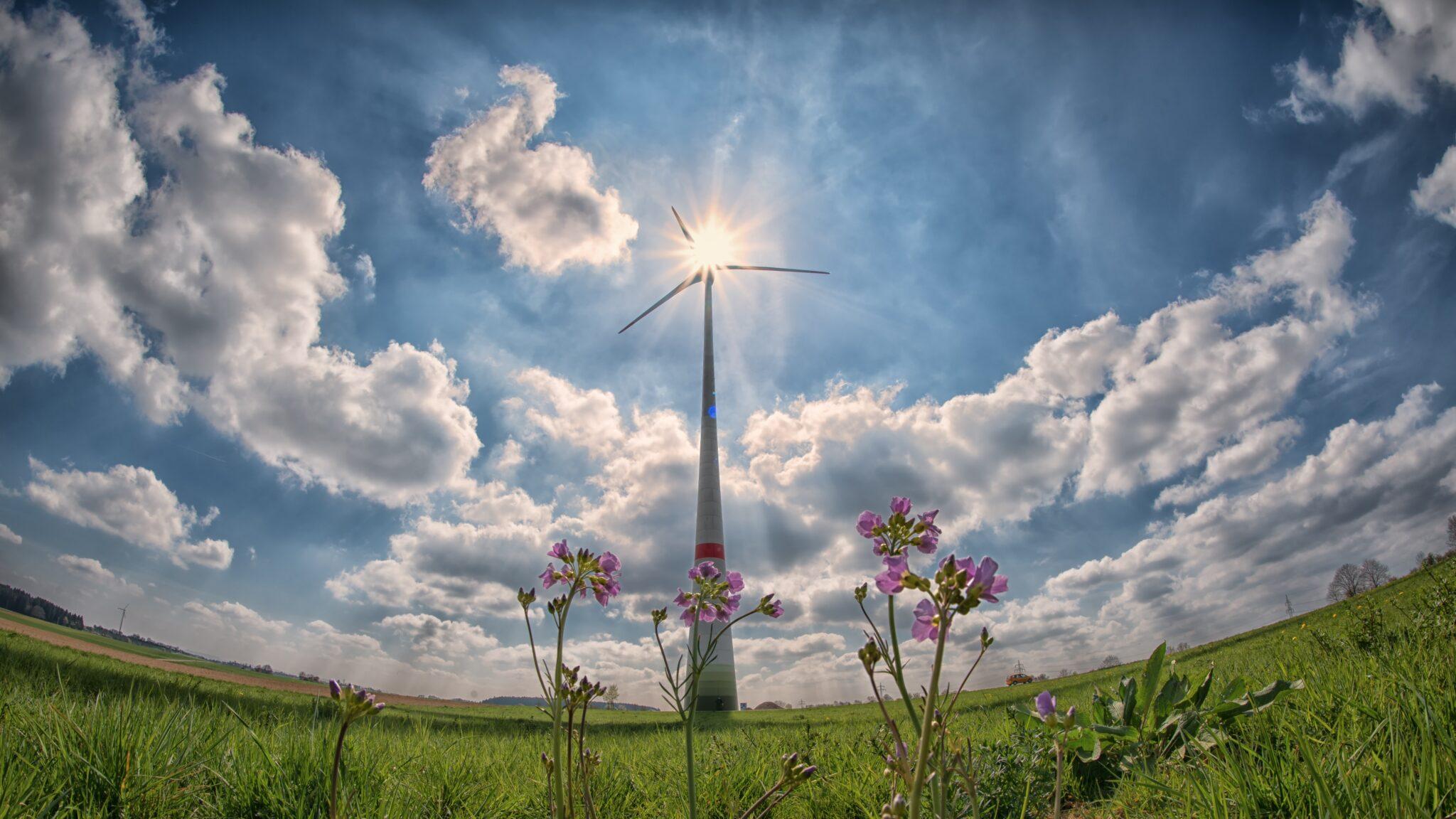 Weitwinkelaufnahme eines Windrades vor Sonne mit Blumen im Vordergrund