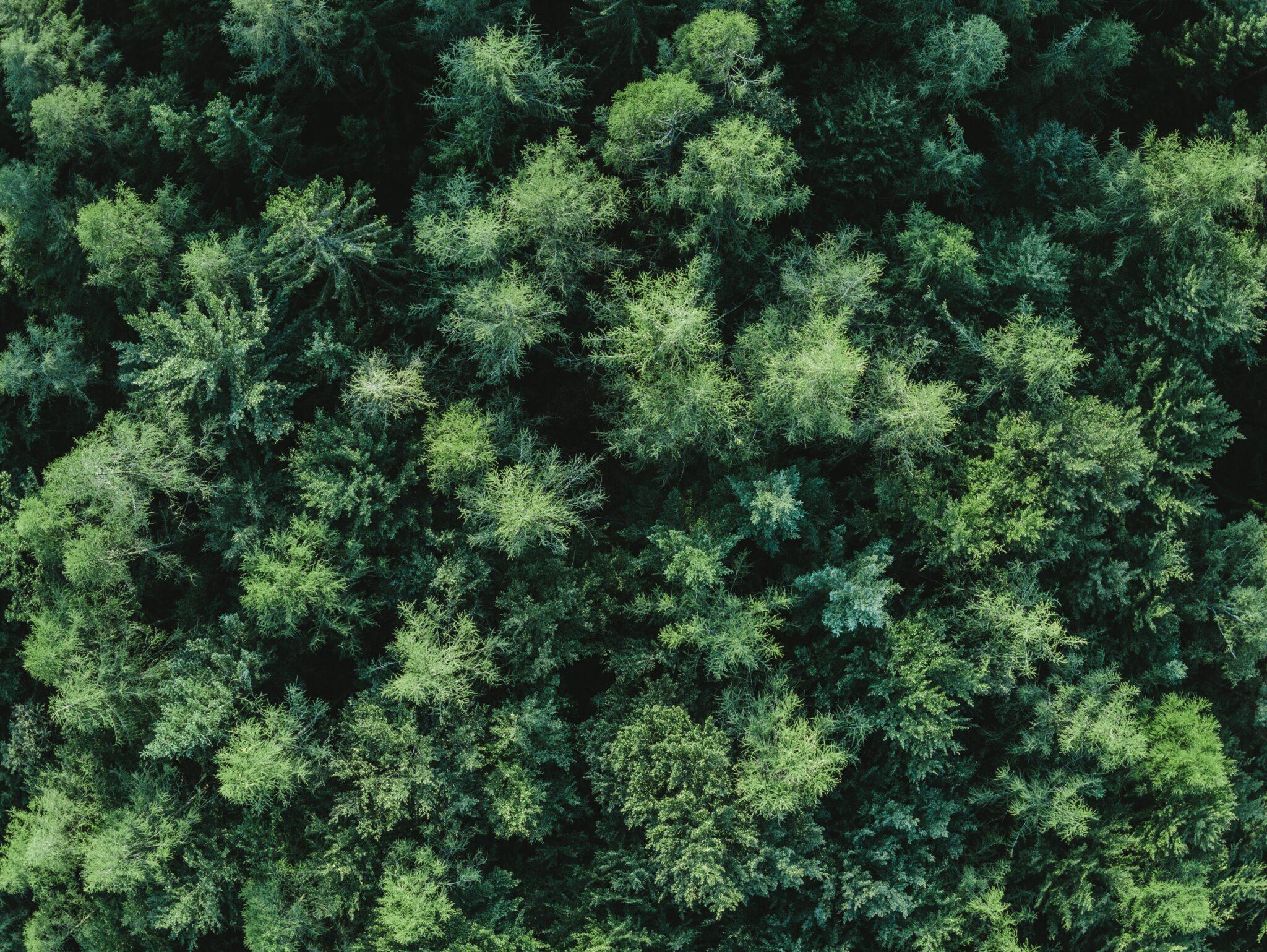Grüner Wald von oben mit einer Drohne aufgenommen