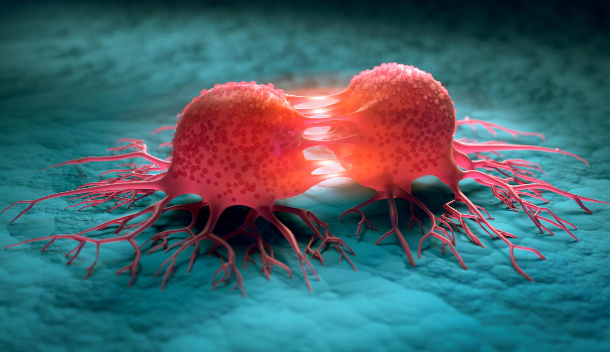 Illustration einer Krebszelle, die sich in 2 Krebszellen teilt.